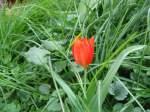 Pflanzen/13911/sattes-rot-kraeftiges-gruen-070409 Sattes Rot, kräftiges Grün... 07.04.09