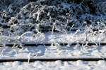 Bahn - mal anders/10784/vom-schnee-bedeckte-und-ueberwucherte-gleise Vom Schnee bedeckte und überwucherte Gleise im S-Bahnhof Heidelberger Platz. Auf dem Weg zur Schule am 17.02.09